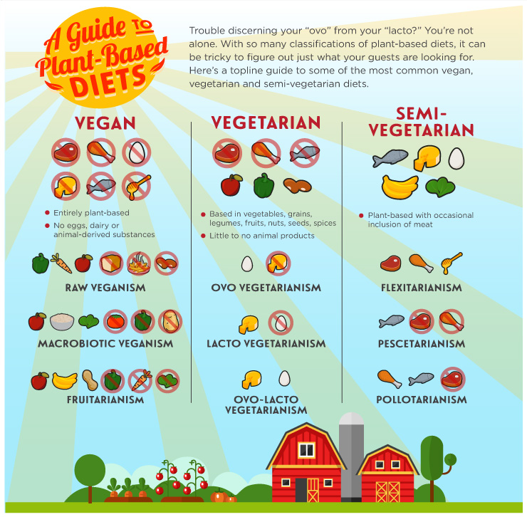 A Guide to Plant-Based Diets